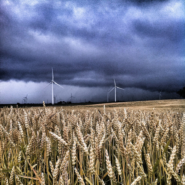 Wheat Certification Deadline is Dec. 15, 2014 Indiana wind farm wheat filed